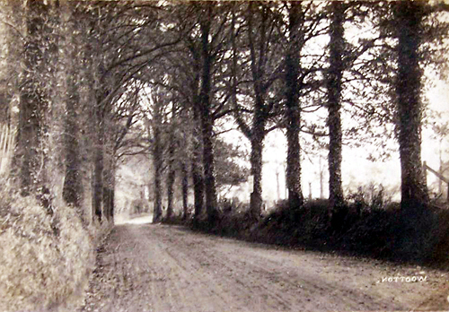 Picture of Beech Lane, Wootton